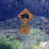 「亀」横断注意:レッドロックス州立公園