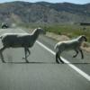 羊横断注意、アメリカ編:旅の暮らしで見つけたもの