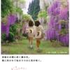 秋田犬を捜せ:旅の暮らしで見つけたもの